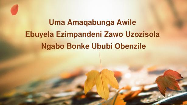 Uma Amaqabunga Awile Ebuyela Ezimpandeni Zawo Uzozisola Ngabo Bonke Ububi Obenzile